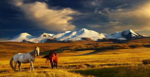 mongolie19bis.jpg