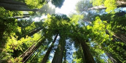sequoia-274158-640.jpg