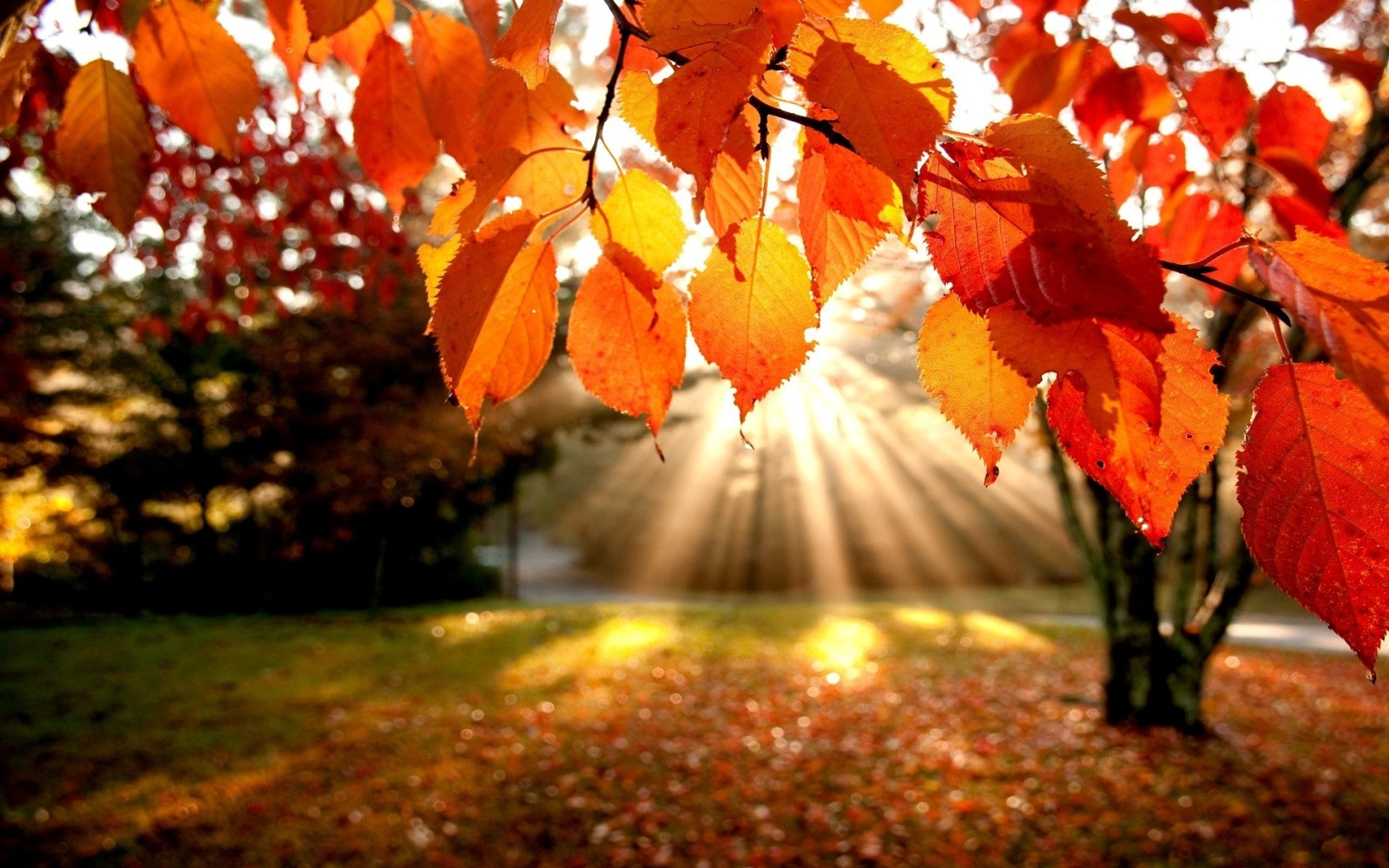 automne-4.jpg