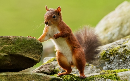 Squirrel-stones_1280x800.jpg