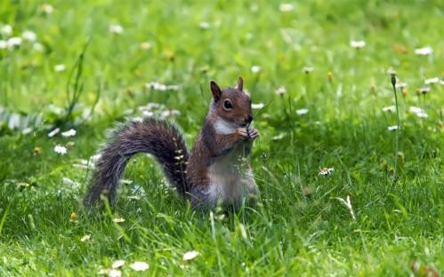 Squirrel-eating-grass-green-flowers_1280x800.jpg