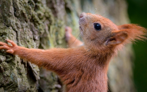 Squirrel-tree-bark_1280x800.jpg