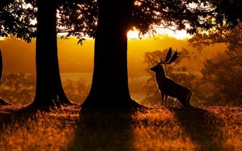 Morning-nature-forest-trees-deer_1280x800.jpg