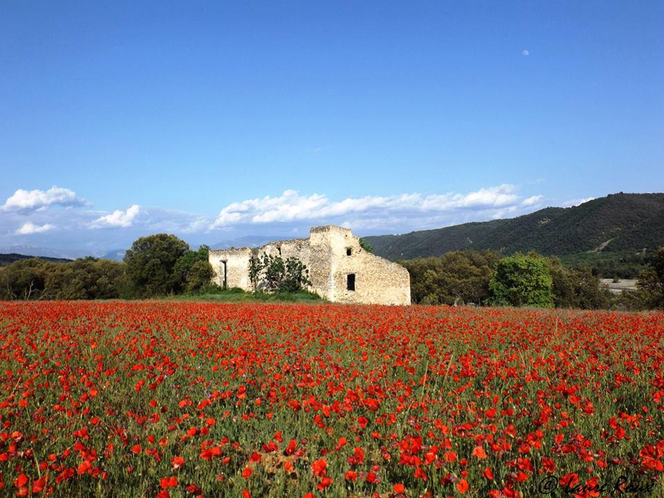 Vallée de l'Asse en Haute Provence.jpg