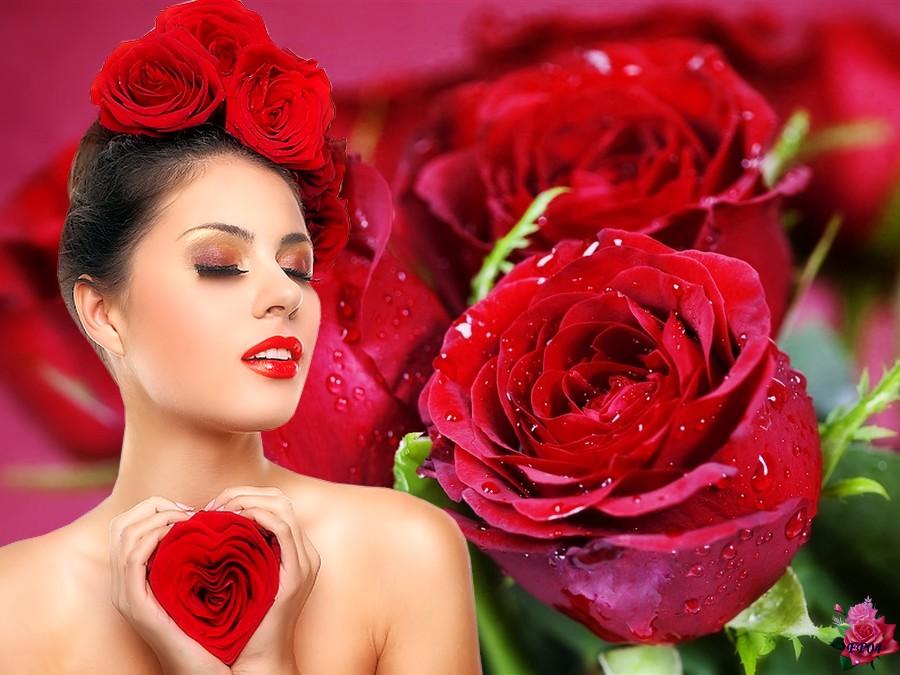 2017-06-12 - red-roses.jpg