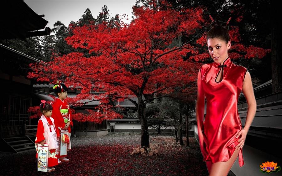 2015-10-17 - Japan house tree red leaves autumn.jpg