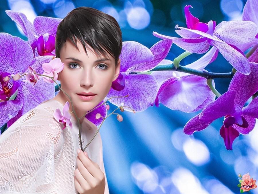 2016-07-27 - Orchidées1.jpg