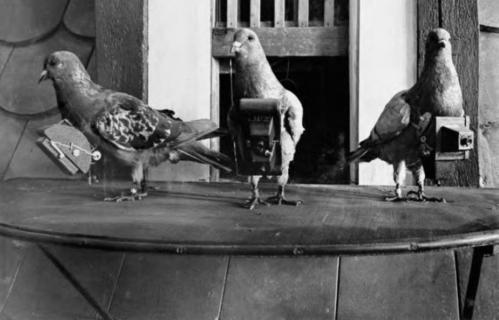 pigeon-camera-photographie-aerienne-01.jpg