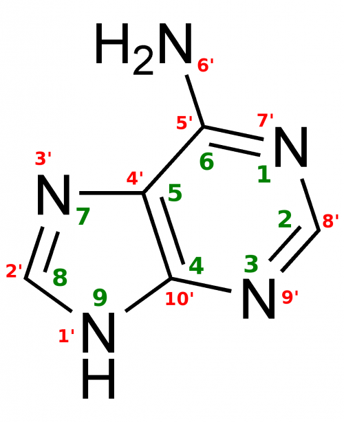 Adenine Structure.png