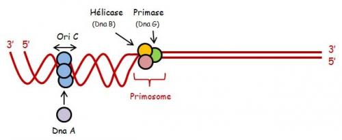 ADN sc 1.jpg