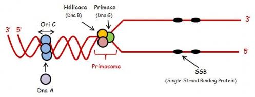 ADN sc 2.jpg
