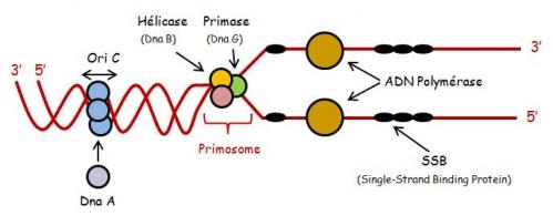 ADN sc 3.jpg