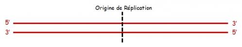 ADN sc 4.jpg