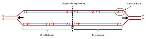 ADN sc 6.jpg