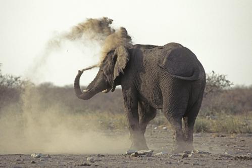 Elephant-poussière (1).jpg