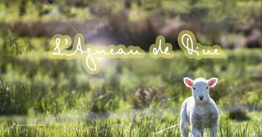 01-09-agneau-de-dieu-w