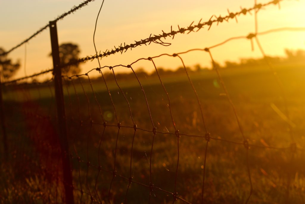 barbed-wire-fence-wire-mesh-110649-1024x683