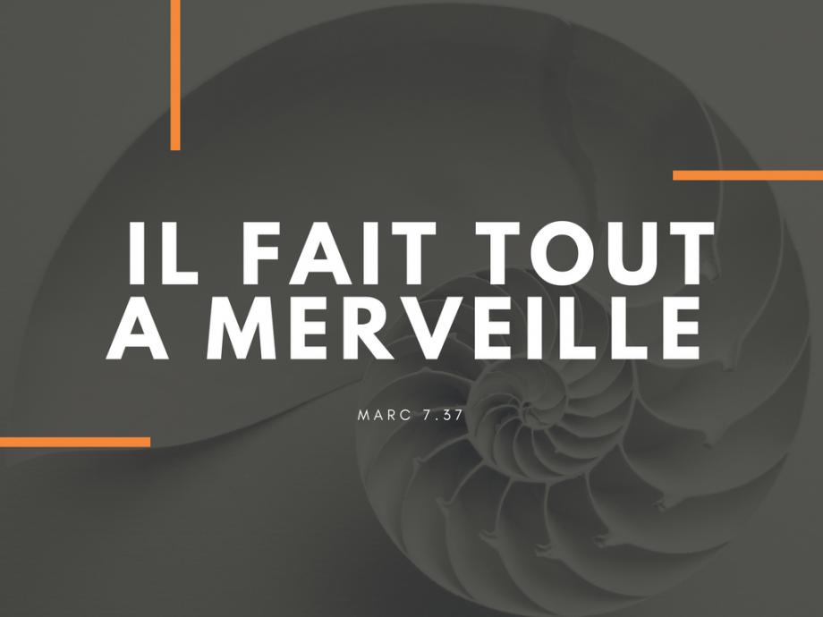 IL FAIT TOUT A MERVEILLE (1)