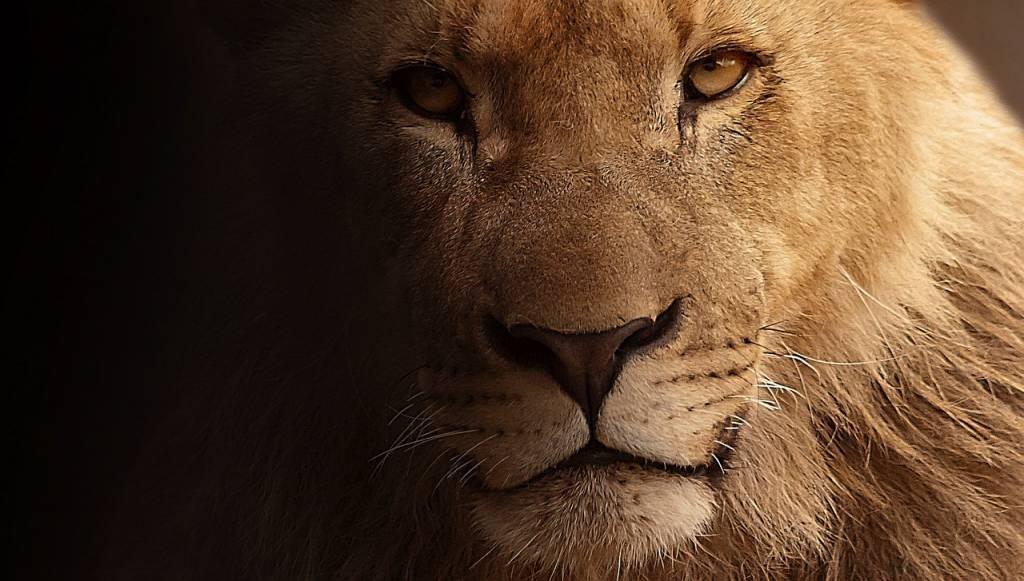 lion-visage