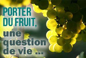ob_6cb4cb_fruit