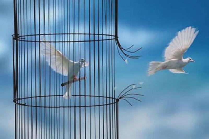 vogel_vrij
