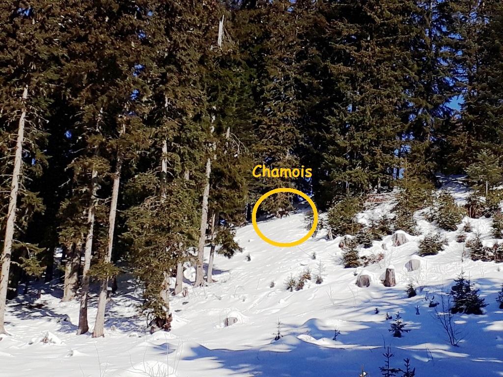 3 Boudin-Col du Pré Groupe A (8).jpg