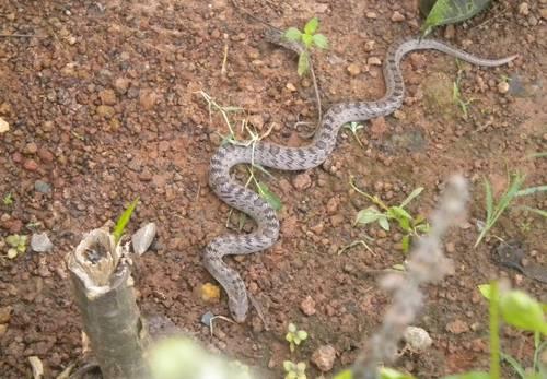 serpentDSCN6944.JPG