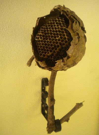 abeilleDSCN8135.JPG