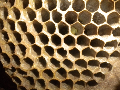 abeilleDSCN8134.JPG