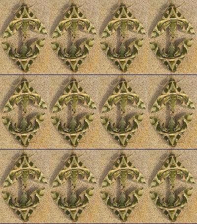 papillonpapillonDSCN8315 - Copy (2)-horz-vert.jpg
