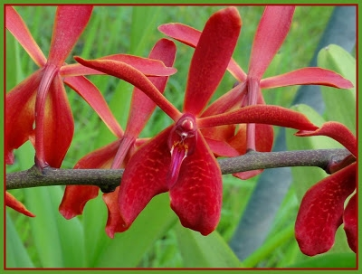 ferme orchidées (2).JPG