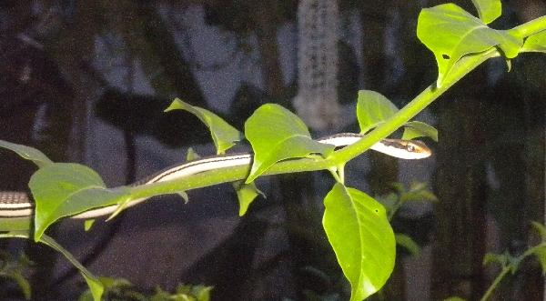 serpentDSCN8113.JPG