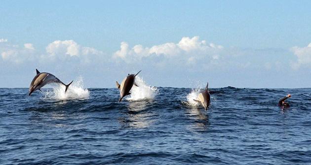 5. dauphins.jpg