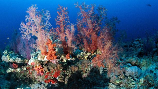 4. coraux.jpg