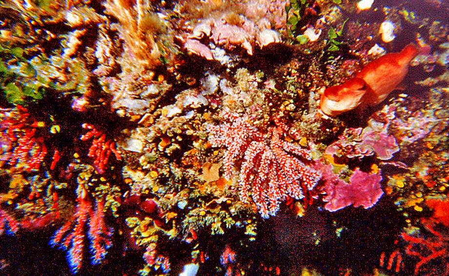 3. corail.jpg