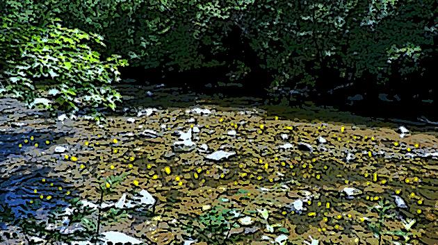 9 or rivière.JPG