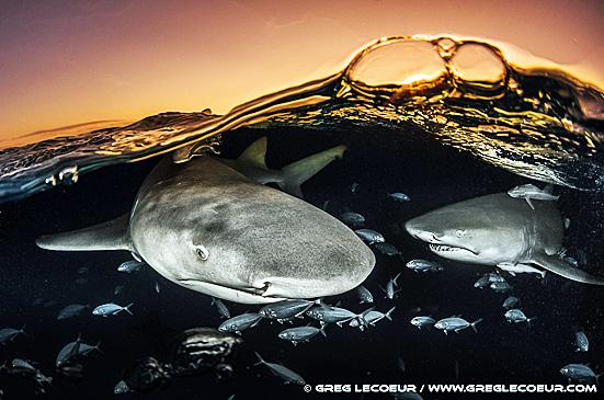 3. requins greg a.jpg