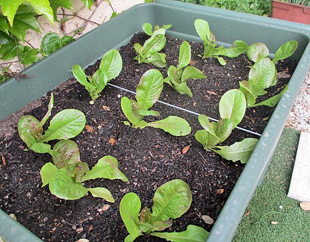 5 salades.JPG
