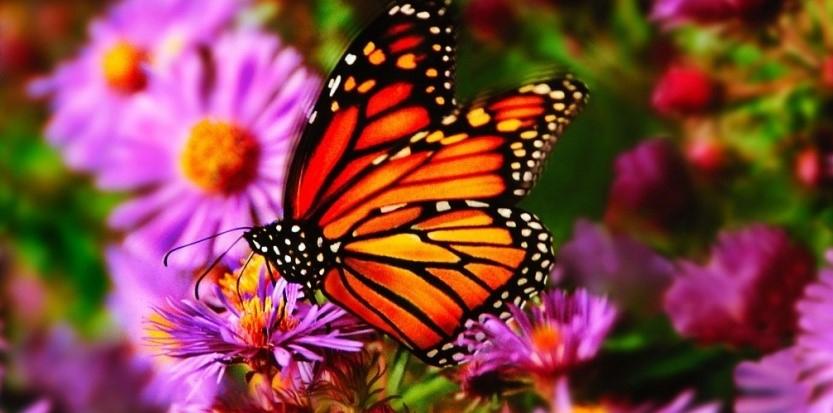 Prends ton envol beau papillon marie yelahiah - Que mange les papillons de nuit ...