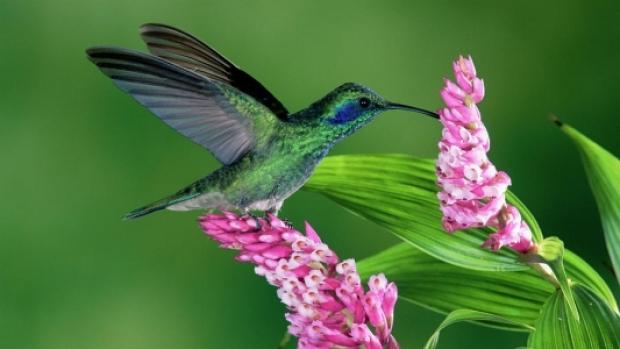 les-colibris-18.jpg