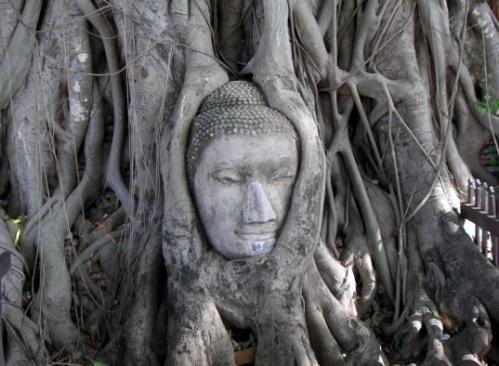 tete de bouddha dans l'arbre.jpg
