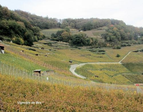 Vignoble de Bex le 13.11.jpg