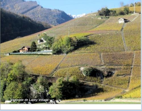 Vignoble de Lavey-Village.jpg