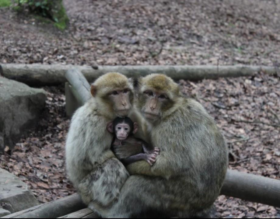 Montagne des singes 02 13.06.jpg