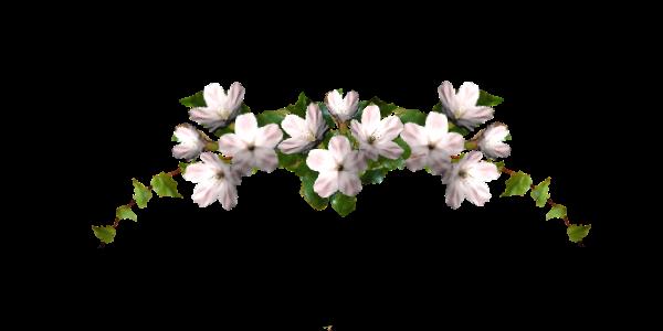 fleur3.png