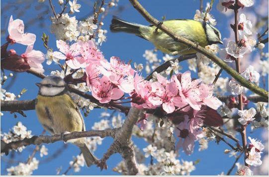 arbre en fleurs et oiseaux.jpg