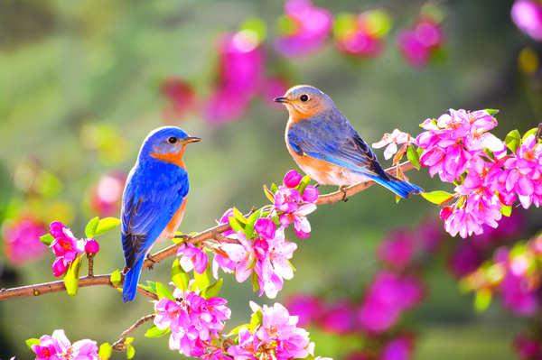 oiseaux_printemps.jpg