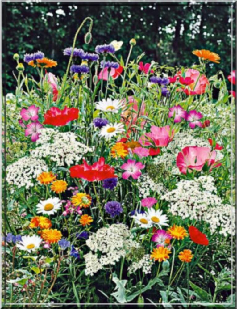 champ de fleurs.jpg