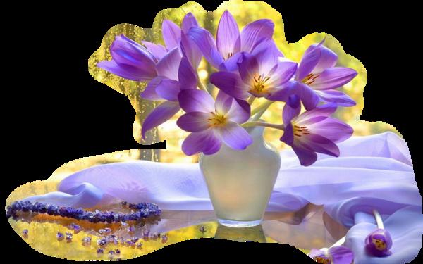 violettes.png