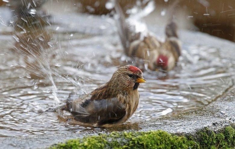 oiseau sur eau.jpg